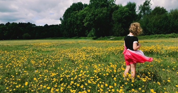 Dandelions in Warren Avenue Playing Fields, Bromley, June 2020